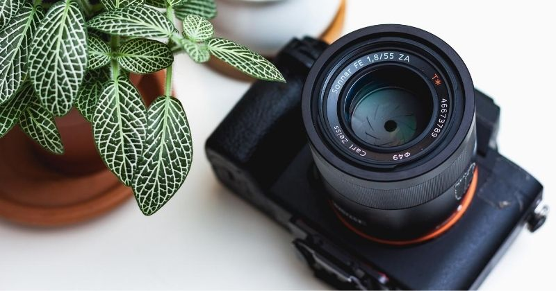 professional camera with green plant and succulent